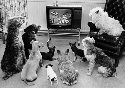 : Cartoon, Pet, Dogs Watches, Funny, Tvs, Watches Toms, Photo, Toms And Jerry, Animal