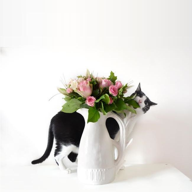 Bouquet solidaire interflora reçu par @valentinehello ❤ #fleurs #bouquet #solidaire #flowers #beautiful #cat #vase #blog #blogueuse #blogging  #interflora #interflorafrance #fleuriste #livraison #fleuristecreateur #compositions #florales