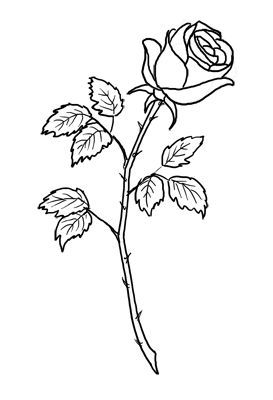 single rose stem drawing yahoo image search results