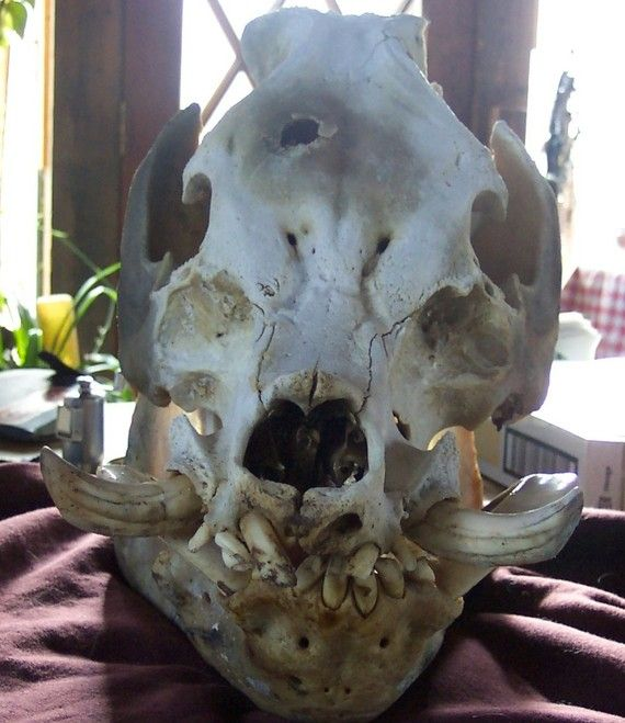 17 Best images about Skullz on Pinterest | The philippines ...