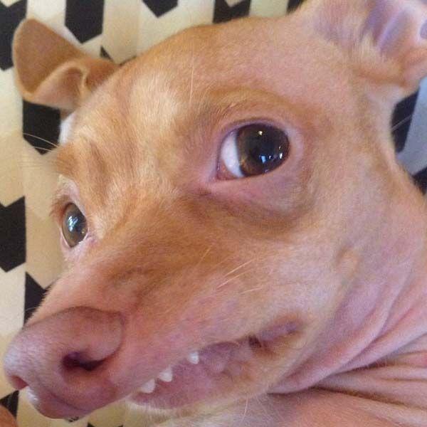 Tuna el Perro Abandonado tiene 400.000 Seguidores en Instagram http://www.sitioviral.com/tuna-el-perro-abandonado-tiene-400-000-seguidores-en-instagram/