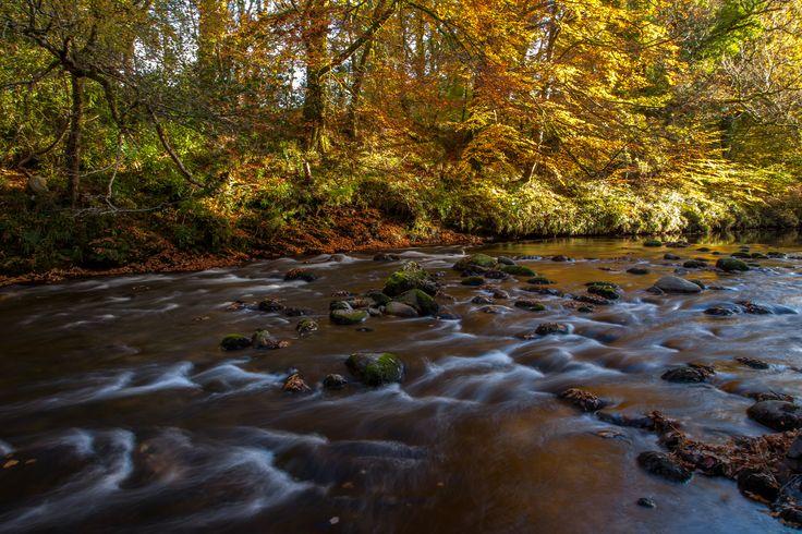 The River Dart
