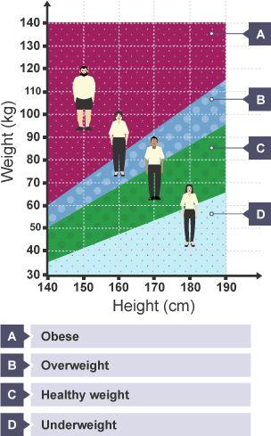 Best 25+ Bmi chart for women ideas on Pinterest Healthy weight - bmi chart template