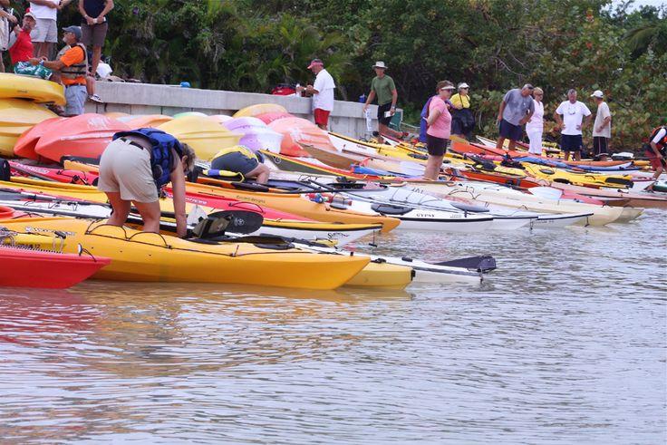 Pin by Naples Kayak Company on Paradise Coast Paddlers