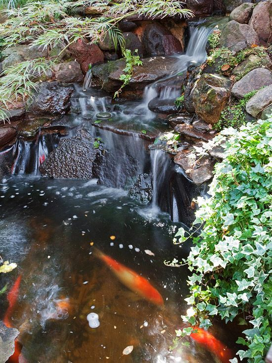 88 best fountains and water features images on pinterest for Tropical fish pond