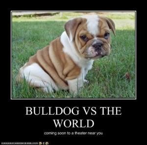 bulldog jokes 1000 images about fresno state fun on pinterest funny 7650