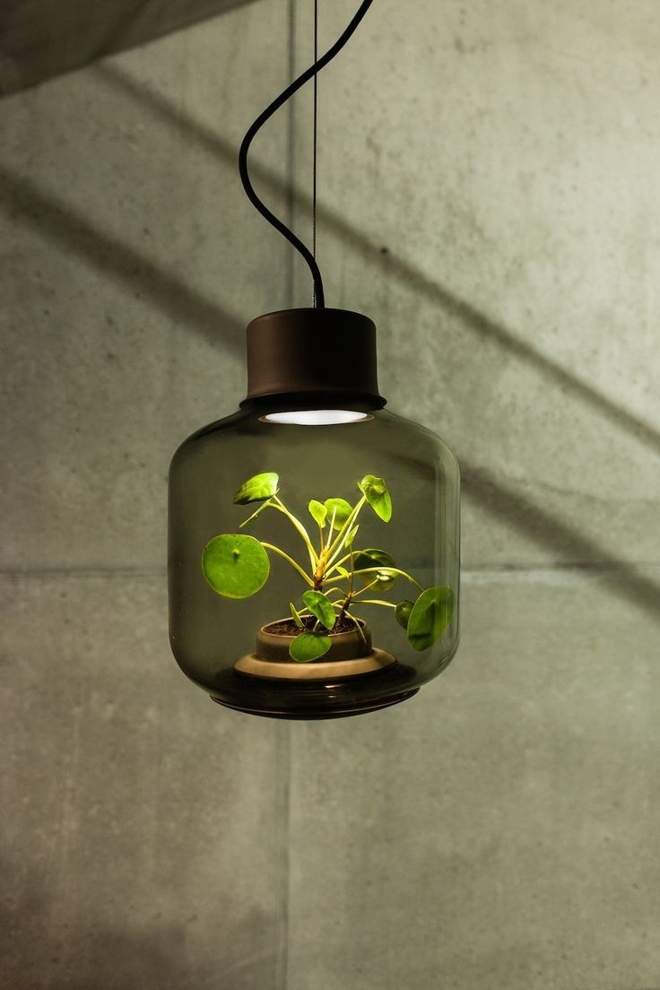 Lamp Study Meaning