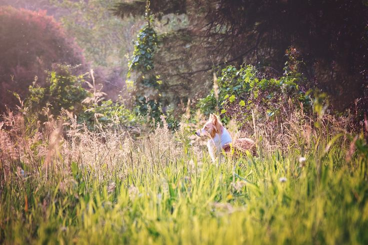 Subscribe to our Pet Photography Newsletter today to receive monthly update and exclusive discounts! Yarra Valley, Melbourne