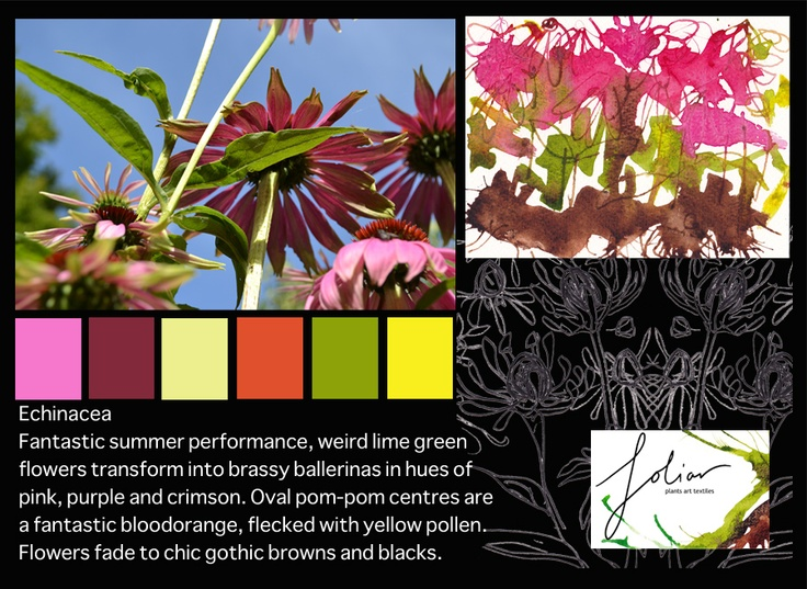 Moodboard - from echinacea in the foliar garden mid summer 2012