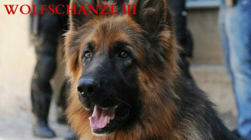 wolfchanze III