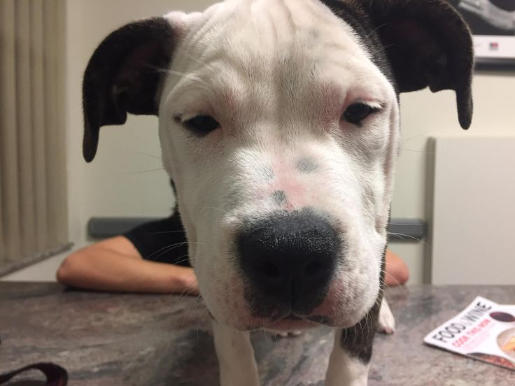 The 1am allergic reaction at the emergency vet face (don't worry she is fine now) http://ift.tt/2nf5Lto