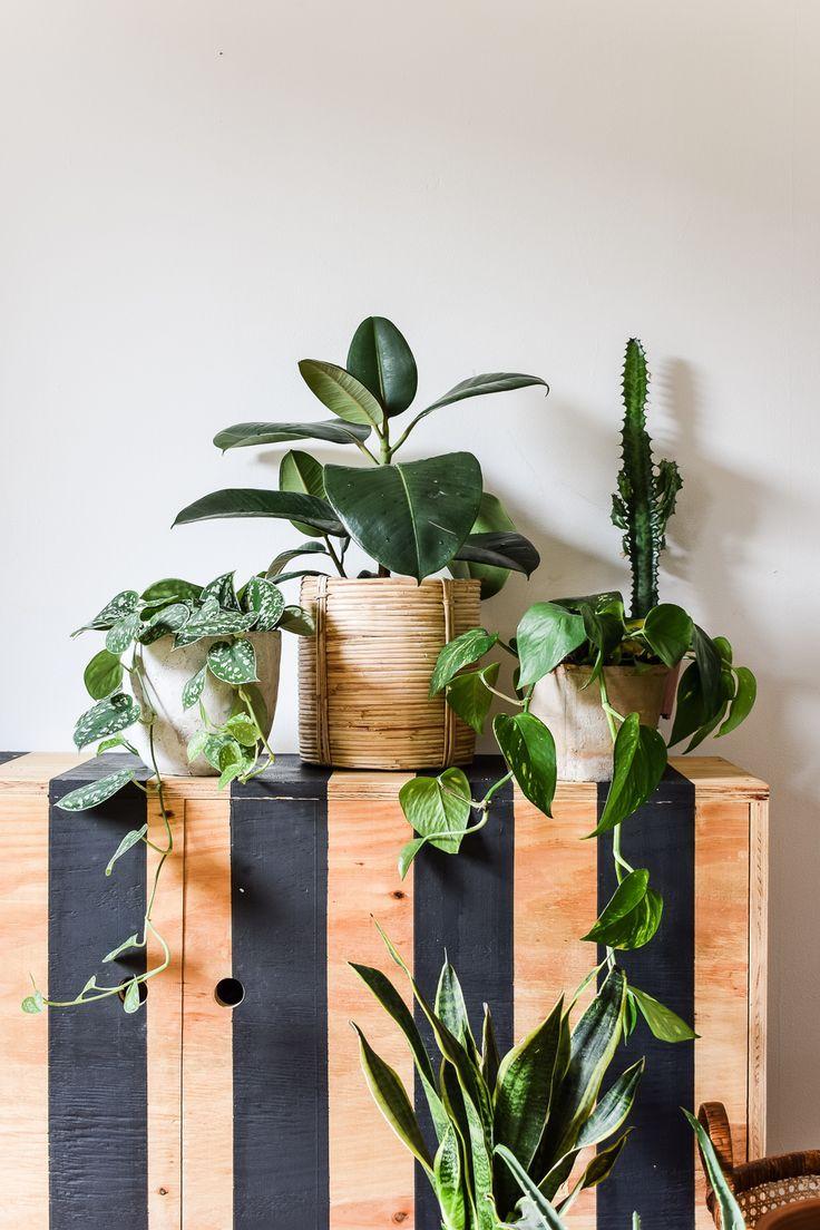 Where To Buy Indoor Plants Online In 2020 Buy Indoor Plants