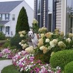 7 New Top Pictures Of Landscaped Front Yards