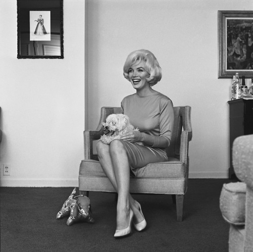 With her dog Maf: Celebrity, Marilyn Monroe, Beautiful Marilyn, Dogs Maf, Doggies Stuff, Animal People, Beverly Hill Hotels, Bombshells Marilyn, Darling Dogs