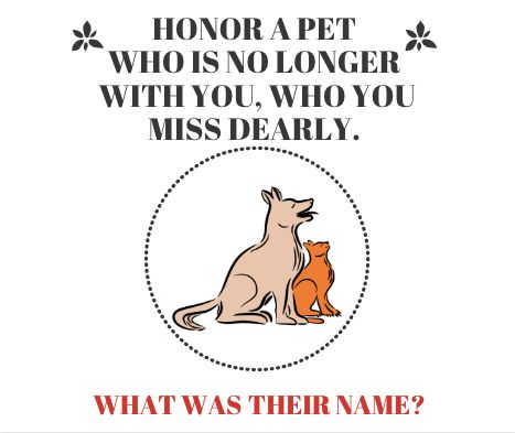 Honor a pet who is no longer with you, who you miss dearly.