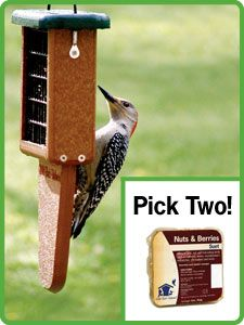 Be nice to the woodpeckers and give them a tail prop for the suet feeder. And suet feeders are essential. The nuthatches, chickadees and woodpeckers will delight with their antics on the feeder.