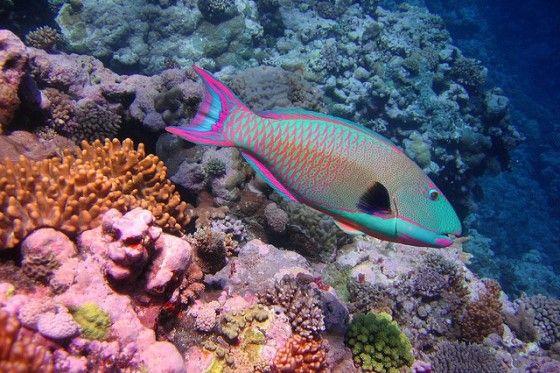 Foram quatro décadas de estudos realizados pelos cientistas do Global Coral Reef Monitoring Network. Em 90 locais diferentes do Caribe, os pesquisadores...