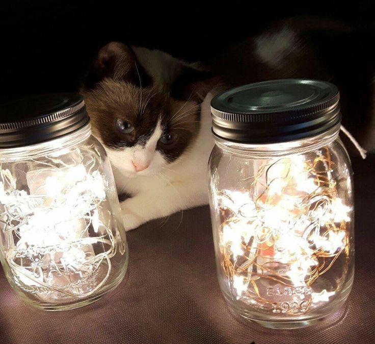 light jars diy cat