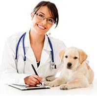 myVet - → Få 3 prisoverslag fra lokale dyrlæger