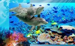 fototapet delfini cu pesti colorati