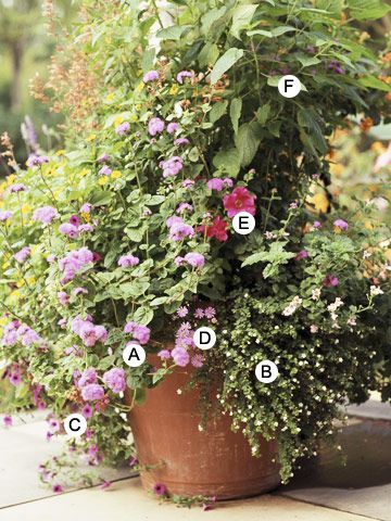 A. Ageratum (Blue Horizon); B. Bacopa (Sutera 'Snowstorm White'); C. Calibrachoa (Superbells Trailing Rose); D. Swan River daisy (Brachycome 'Mauve Delight'); E. Petunia (Explorer Rose); F. Pineapple sage (Salvia elegans)