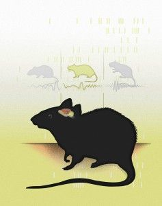 Neurons in the Brain Tune into Different Frequencies for Different Spatial Memory Tasks - http://scienceblog.com/71818/neurons-in-the-brain-tune-into-different-frequencies-for-different-spatial-memory-tasks/