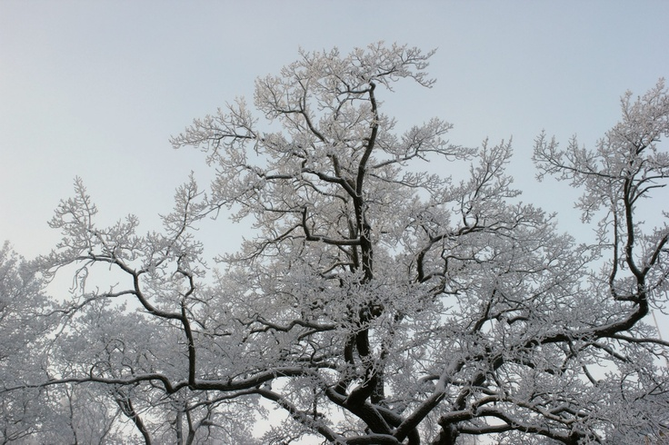Tampere / Finland / Finnish winter