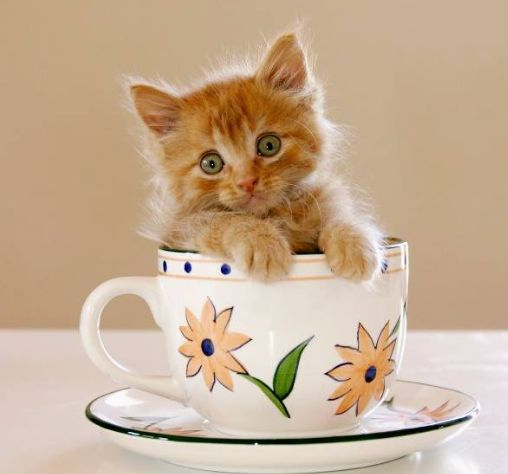 """One cup of cuteness keeps the blues away"""