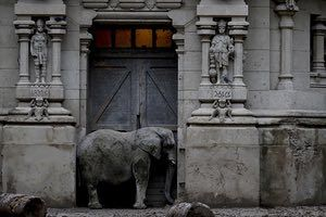 Pupy, an African elephant, stands in the doorway of his enclosure at the former city zoo now known as Eco Parque in Buenos Aires, Argentina