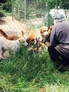 Posted August 24, 2015 More than 40 dogs removed from Orangeburg, SC property of man who was only trying to help them