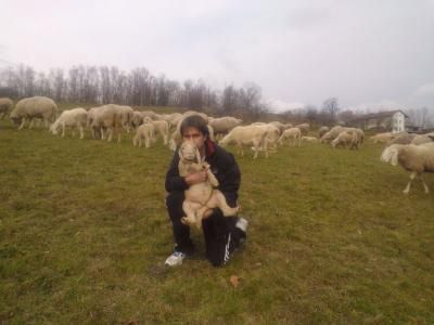 Salviamo un agnello con adozione on line