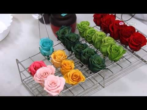 Technolyze-Preservation technology...′Unwithering flowers′ ′시들지 않는 꽃′..보존화 기술 - YouTube