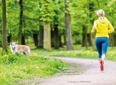 RETROUVER LA LIGNE AVEC MON CHIEN ! On ne se doute pas de tout ce que notre chien fait pour nous, et pourtant ! Lorsque l'on se force à sortir avec lui, ne serait-ce que pour sa petite promenade hygiénique, cela contribue à nous rapprocher du seuil des dix mille pas par jour, recommandés pour la santé. Si en plus on sort pour une longue randonnée, c'est déjà du sport ! Et cela se traduit par une meilleure santé globale des propriétaires de chiens par rapport à ceux qui n'en ont pas……