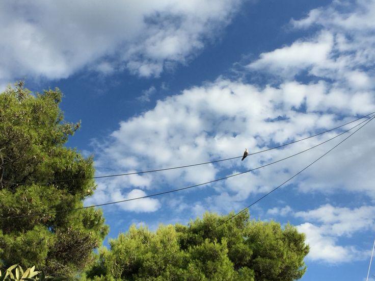 Live free. #bird