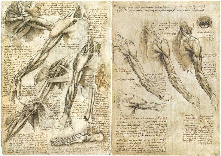 Leonardo da Vinci  (Anchiano, 15 aprile 1452 – Amboise, 2 maggio 1519)  Anatomia muscolare