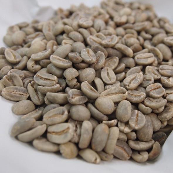 東ティモール産 有機コーヒー生豆(アラビカ種) 1kg - フェアトレードで東ティモールコーヒー生産者を支援。