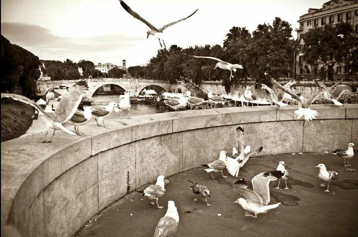 #tiberfest #estateromana #seagulls