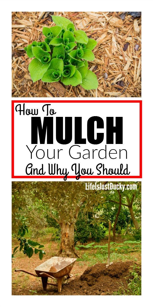 69 best images about garden composting mulching soil - Weed killer safe for vegetable garden ...