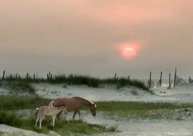 To See The Wild Horses on the Outer Banks