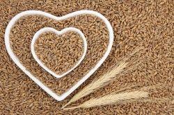 Pšenice špalda je starou plodinou, která u nás byla prakticky zapomenuta a v…