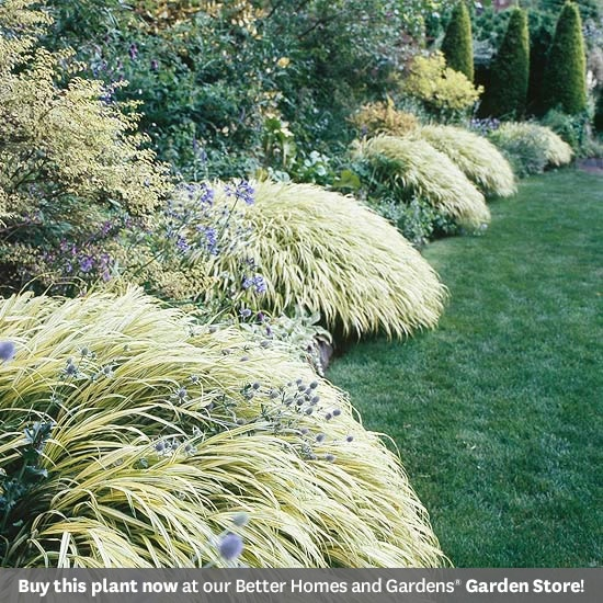 68 best ornamental grasses images on pinterest for Ornamental grasses that grow in shade