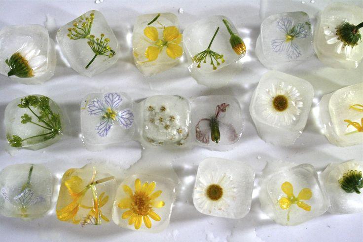 ijsblokjes met bloem - Google zoeken