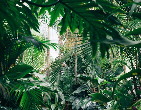 10 Plantes Exotiques Et Rustiques Pour Jardin Jungle Plante