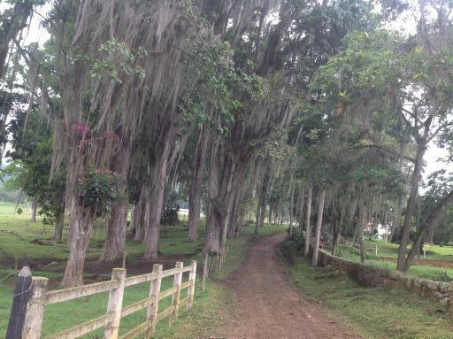 En Santander bellas haciendas, vivencias del campo inolvidables