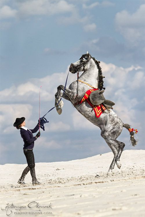Blanka Stora & PRE stallion Escudero VII Katarzyna Okrzesik Photographer
