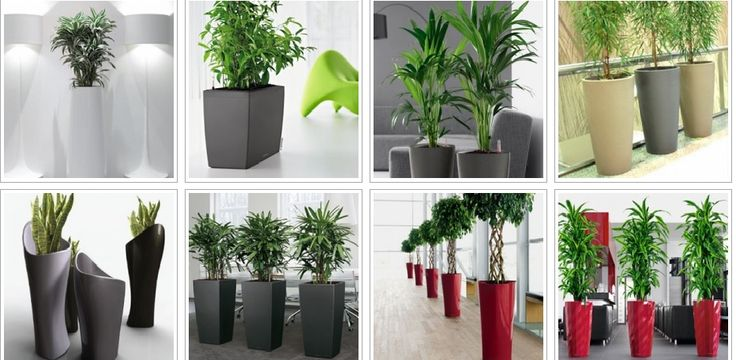 If you have ideas of creating greenery in your nearby ares.then its sound nice! We can help you by providing green crafts and plants at your places. We specialise in indoor plants hire for airport lounges, offices and office receptions.