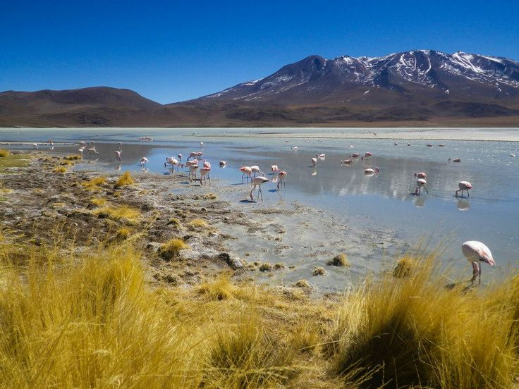 #laguna #bolivia #Latinomerica #sudamerica #travel #world #photography