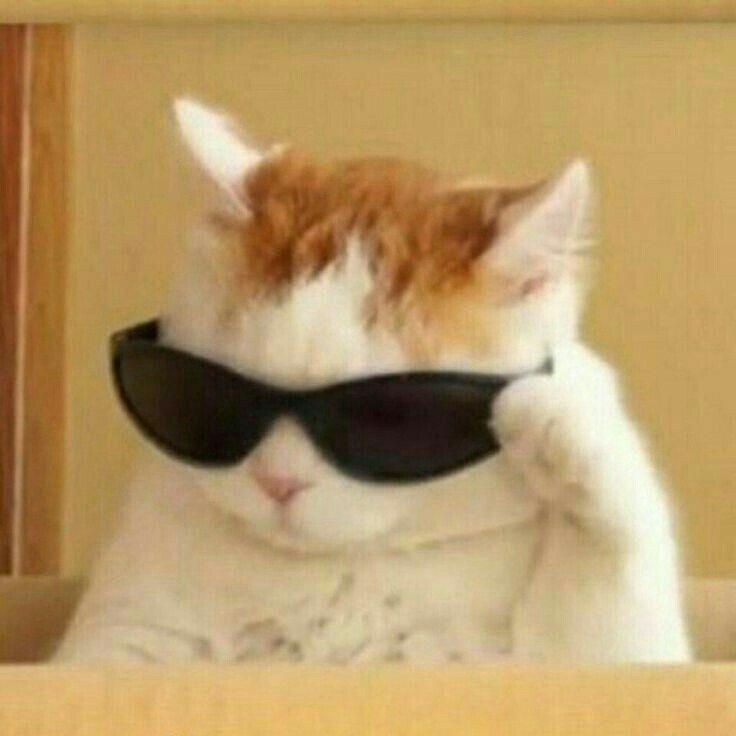 Ada Su Adlı Kullanıcının Animals Panosundaki Pin Komik Kedi Resimleri Komik Hayvan Alıntıları Komik Köpek Fotoğrafları