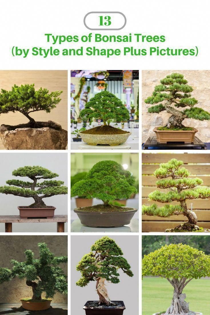 What Is An Outdoor Bonsai Bonsai Tree Types Indoor Bonsai Tree