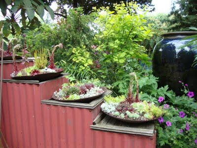plough disc planters on metal tiered stand